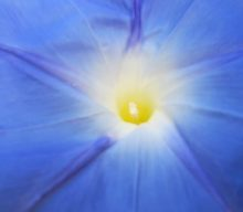 A morning-glory at my window satisfies me more than the metaphysics of books…